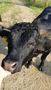 La Spinosa - Esperienze - Animali della fattoria