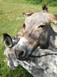 La Spinosa - Esperienze - Gli animali della Fattoria
